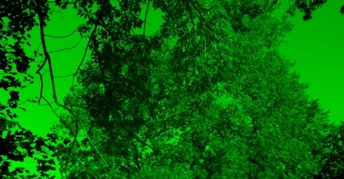 Zaļš, vienkārši zaļš