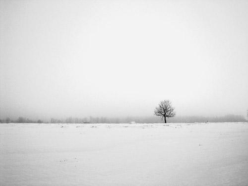 Lauks un koks